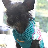 Adopt A Pet :: Stella - Bedminster, NJ