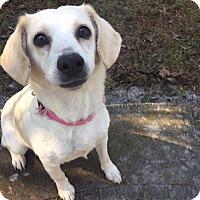 Adopt A Pet :: Rosie - Jacksonville, NC