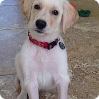 Adopt A Pet :: Digger - Fort Worth, TX