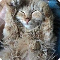 Adopt A Pet :: Carmella - Mission Viejo, CA