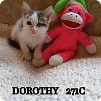 Adopt A Pet :: Dorothy - Spring, TX
