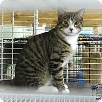 Adopt A Pet :: Lenny - Marlinton, WV