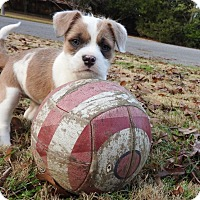 Adopt A Pet :: ZYDECO - Nashville, TN