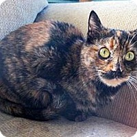 Adopt A Pet :: Leigh - Tucson, AZ
