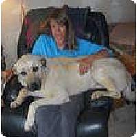 Adopt A Pet :: Suna - Hamilton, MT