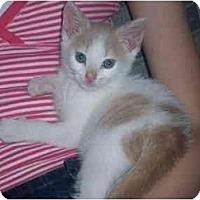 Adopt A Pet :: P.J. - Irvine, CA