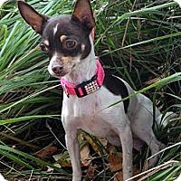 Adopt A Pet :: Vail - Bridgeton, MO
