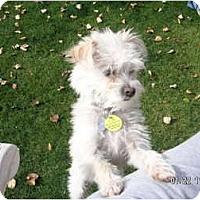 Adopt A Pet :: PRINCE - Phoenix, AZ