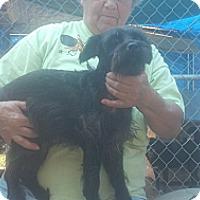 Adopt A Pet :: Sammy - Crump, TN