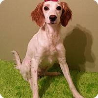 Adopt A Pet :: Fannie - Russellville, KY