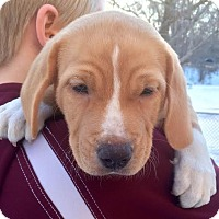Adopt A Pet :: Wynnie - Minneapolis, MN
