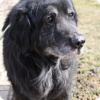 Adopt A Pet :: Beauregard - Lake Odessa, MI