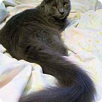 Adopt A Pet :: Elegant - Merrifield, VA