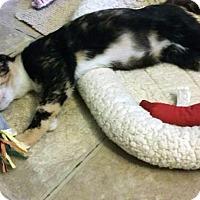 Adopt A Pet :: Cami - Mission Viejo, CA