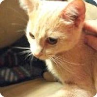 Adopt A Pet :: Kleio - Durham, NC