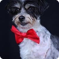 Adopt A Pet :: WiFi - SAN PEDRO, CA