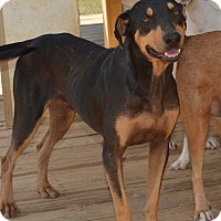 Adopt A Pet :: Skeeter - Charlemont, MA
