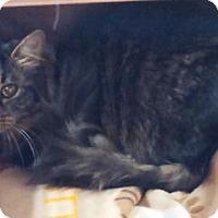 Adopt A Pet :: Phoebe - Amelia, OH