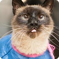 Adopt A Pet :: Aristos (& Stevia) - Herndon, VA