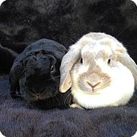 Adopt A Pet :: Delaney & Hadley - Watauga, TX