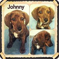 Adopt A Pet :: Johnny meet me 4/8 - Manchester, CT