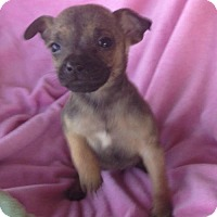 Adopt A Pet :: Hadley - Hagerstown, MD