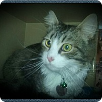 Adopt A Pet :: Curry - Richmond, CA