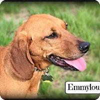 Adopt A Pet :: Emmylou - Doylestown, PA