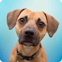 Adopt A Pet :: ZEEKY - Upper Marlboro, MD