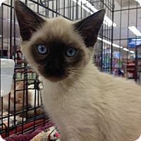 Adopt A Pet :: Sonia - Redondo Beach, CA