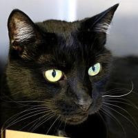 Adopt A Pet :: Harry - Roseville, CA