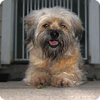 Adopt A Pet :: Peanut ButterCup - Houston, TX