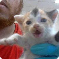 Adopt A Pet :: PEBBLES - Conroe, TX