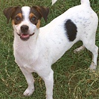 Adopt A Pet :: Kiwi - McKinney, TX