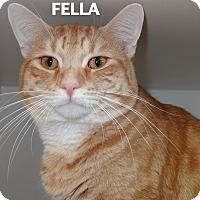 Adopt A Pet :: Fella - Lapeer, MI