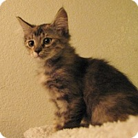 Adopt A Pet :: Evelyn - Polson, MT