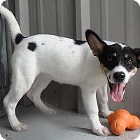 Adopt A Pet :: Saffron - Seguin, TX