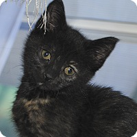 Adopt A Pet :: Liza - Middleton, WI