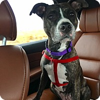 Adopt A Pet :: Tootsie - Heber City, UT