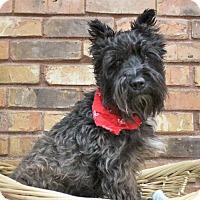 Adopt A Pet :: Rebel - Benbrook, TX