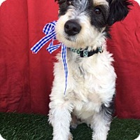 Adopt A Pet :: MOCHI - Santa Monica, CA
