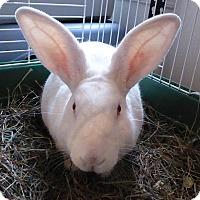 Adopt A Pet :: Rick - Alexandria, VA