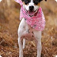Adopt A Pet :: Angelica - Fayetteville, GA