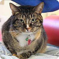 Adopt A Pet :: Nyla - Neosho, MO