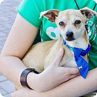 Adopt A Pet :: Rudy - Saint Augustine, FL