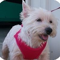 Adopt A Pet :: Miss Lucy - Brattleboro, VT