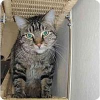 Adopt A Pet :: Caspian - Scottsdale, AZ