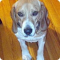 Adopt A Pet :: Dan - Novi, MI