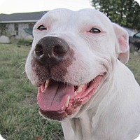 Adopt A Pet :: Theena - Copperas Cove, TX