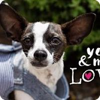 Adopt A Pet :: Bob - Mesa, AZ
